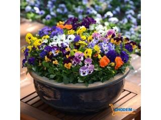 Khu vườn đẹp nên thơ với những loại hoa đặc trưng của mùa thu